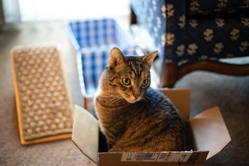 Chat tigré assis dans un carton