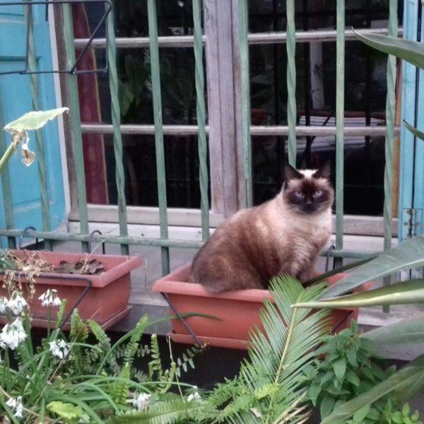 Chat dans un pot de fleur devant une fenêtre.