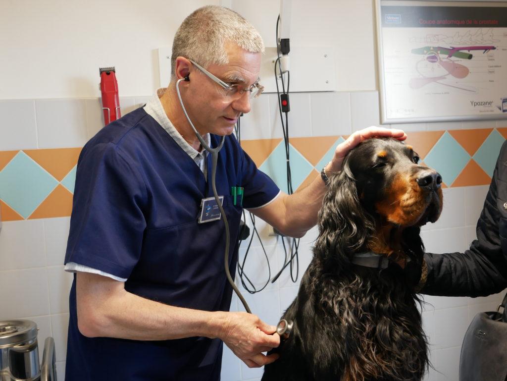 Vétérinaire exerçant sur un chien serein et confiant.