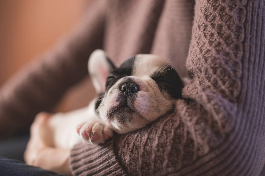 Chiot dormant dans les bras de son maître