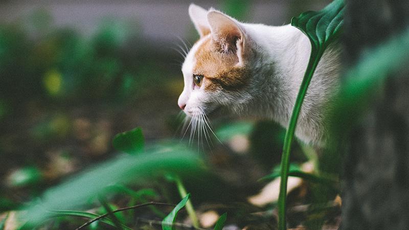 Chat marchant dans un jardin