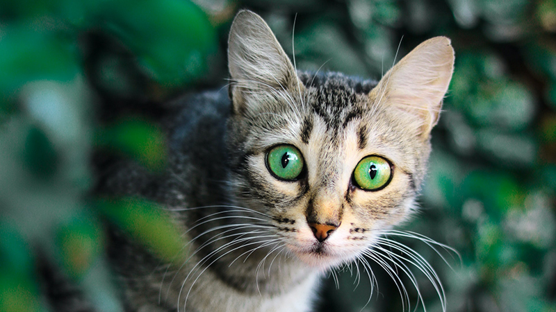 Chat en extérieur ayant vu une proie