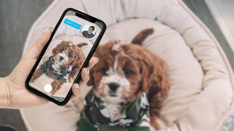 Téléphone filmant un chien pour de la télémédecine