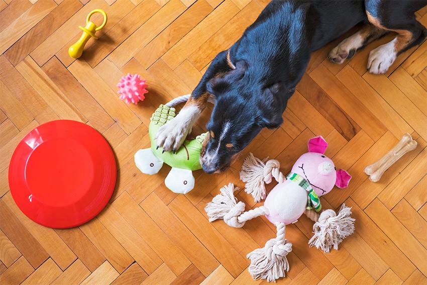 Vue plongeante d'un chien couché près de ses jouets