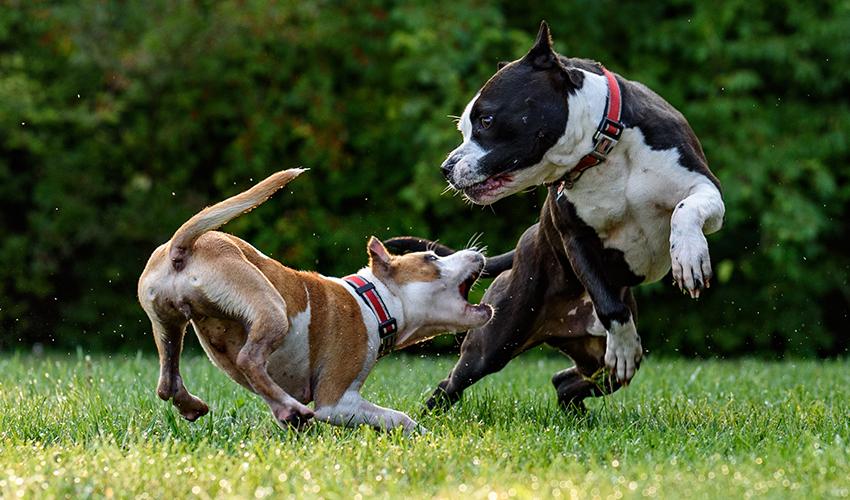 Chien essayant de mordre un autre chien
