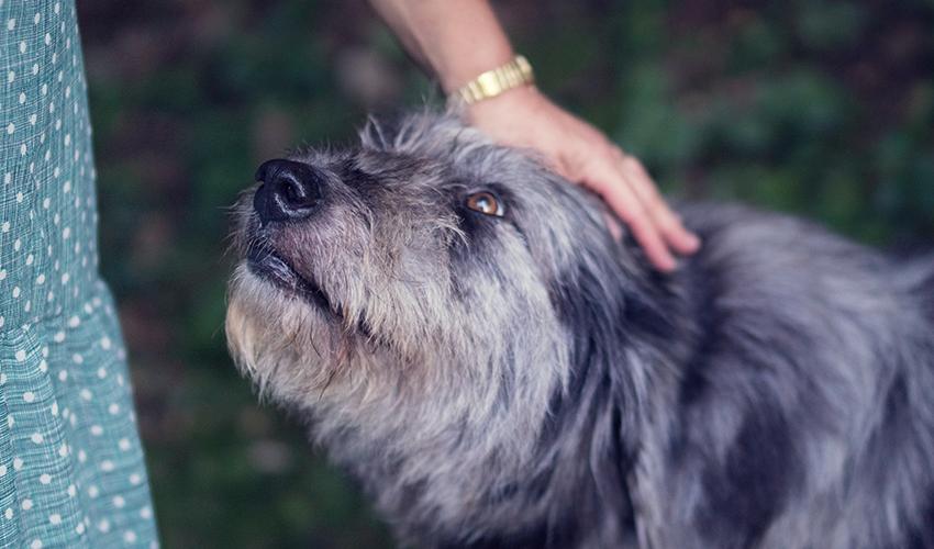 Main caressant la tête d'un chien levée vers la personne